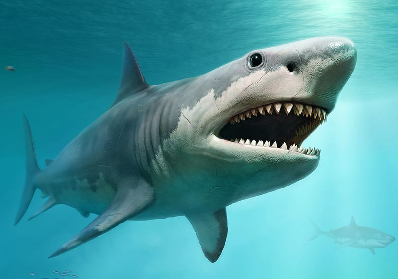 Classroom Science Leads to Revision of Megalodon's Size