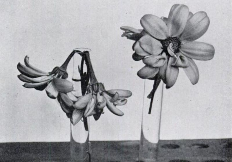 Posies, Poison, and Periods, Early 1920s