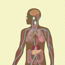 Infographic: Bodily Systems Affected by Long COVID