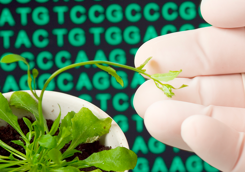 Investigating Genetic and Epigenetic Landscapes with Long-Read Sequencing