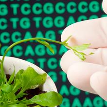 用长读测序研究遗传和表观遗传景观