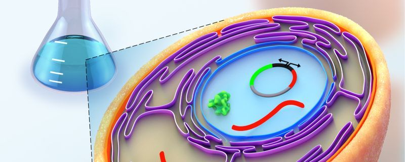 Infographic: A Yeast Model for Studying Histone Modifications