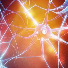 Neuron-Released Protein Can Set Off Inflammation: Study