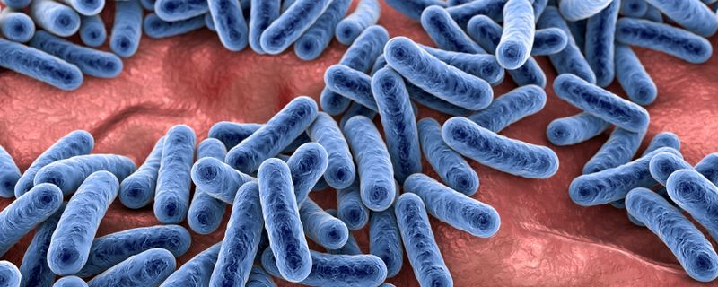 Gut Microbiome May Help or Hinder Defenses Against SARS-CoV-2