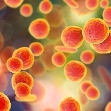 Safeguarding Precious Cell Lines from Mycoplasma Contamination