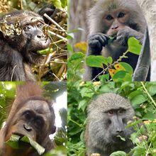 Umami Taste Receptor Evolved with Primates' Diets