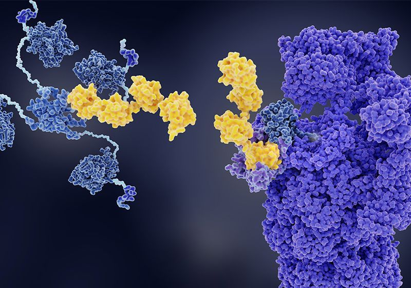 Pioneering Research in E3 Ubiquitin Ligase Biology and Applications to Drug Discovery