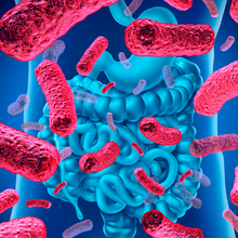 An Optimized User Experience for Microbiome Research