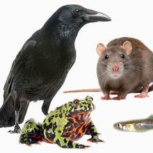 Numerosity Around the Animal Kingdom