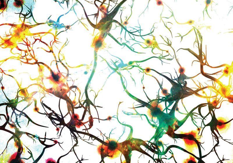 Microglia as Therapeutic Targets in Neurodegenerative Diseases