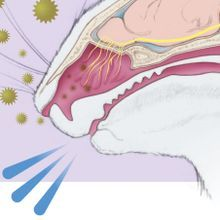 Infographic: The Neural Pathway of Sneezing