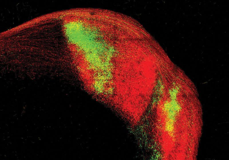 Neurons Simplify Visual Signals by Responding to Only One Retina