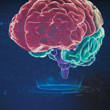 Mapping the Brain in 3-D
