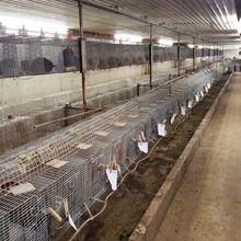 Chinchilla Supplier Loses License over Animal Welfare Violations