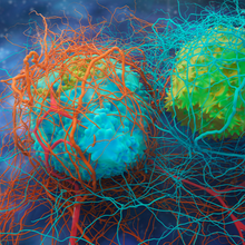 Understanding Immune Cell Function in Cancer