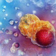Understanding Cancer Evolution Through the Lens of Single Cell Genomics