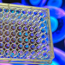 High-Throughput Solutions for Lead Candidate Discovery