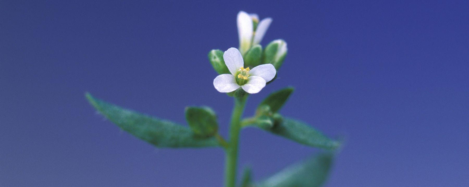 Plants Use RNA to Talk to Neighbors